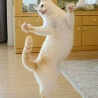 踊ってみた。メンバーに誘ってください。