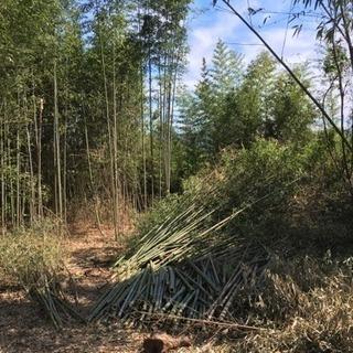 竹 木 薪や竹粉などにどうですか?