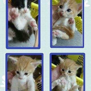 生後1ヶ月半の子猫ちゃん達😺