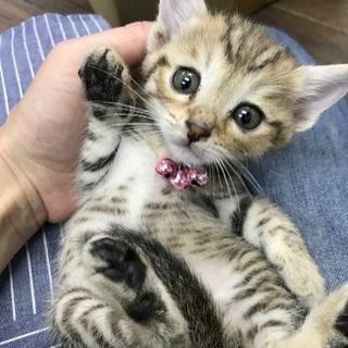 生後約2週間、約一ヶ月の仔猫(沢山います‼️)
