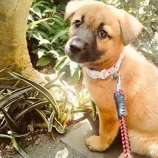 モコちゃん、二カ月❗️姉妹犬🎵