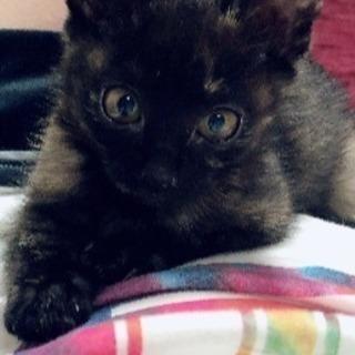 4ヶ月の子猫♡