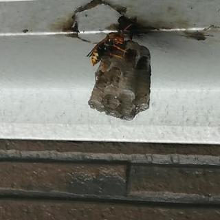 小さい蜂の巣取ります❗