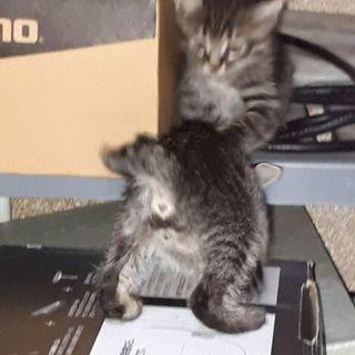 4月生まれの子猫さんの里親さん急募