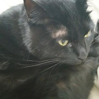 黒猫4才(雄)の里親を探しています。