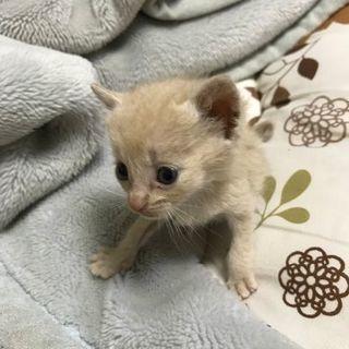 25日殺処分予定の子猫です。