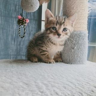 一ヶ月齢子猫、めっちゃ可愛い女の子!候補者相談中