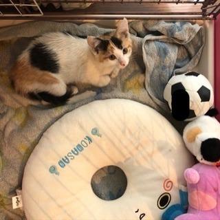 3匹の子猫の家族になって下さい