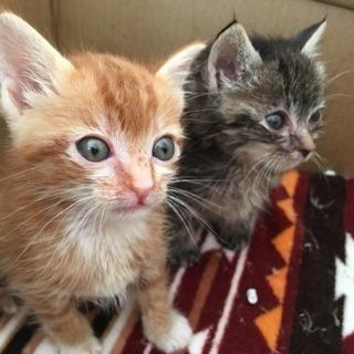 1ヶ月の兄弟猫❤️