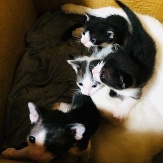 至急!可愛い子猫4匹
