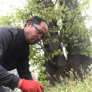 庭の手入れ 木の伐採店 ツチヤガーデンホーム(埼玉県所沢市 さい...