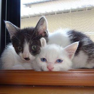 子猫2匹の里親さんを探しています