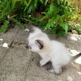白ネコです。