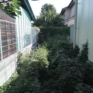 草刈り・草むしり・お庭掃除