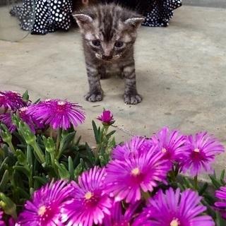 子猫の里親さま募集①トラ猫です