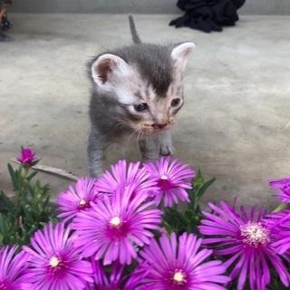子猫の里親さま募集②モヒカンです