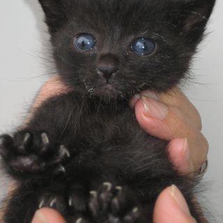 かわいい3匹の子猫ちゃんの里親を探しています