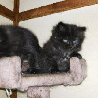 4月18日産まれの子猫2匹