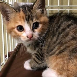 2か月の子猫