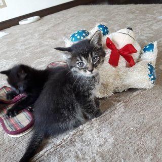 まだ小さいのに、母猫から引き離され、ミカンの箱に詰められて捨てら...