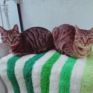 猫2匹を保護しています。