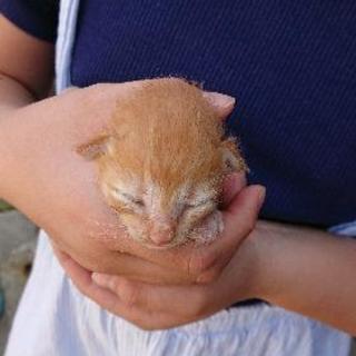 猫の赤ちゃん。