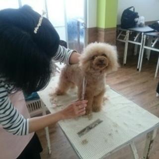 愛犬のために出来ることは、もっとある!神戸愛犬美容専門学院 姫路校...