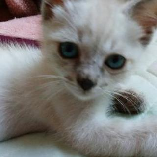生後2ヶ月 オス猫です(^^)