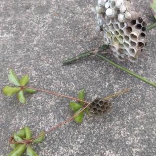 業界初! ハチの巣 予防 アドバイス 巣を作らせない予防剤の散布