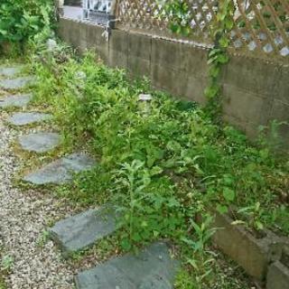 庭の草むしり、手入れ