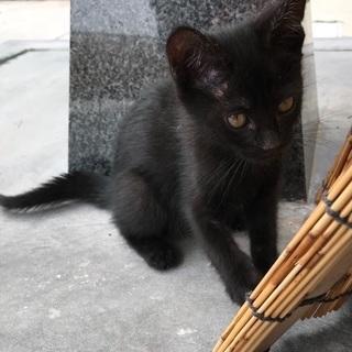 人懐っこい2〜3カ月の黒猫♡