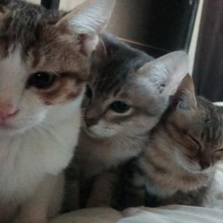 【里親募集】宮崎市 猫 三匹
