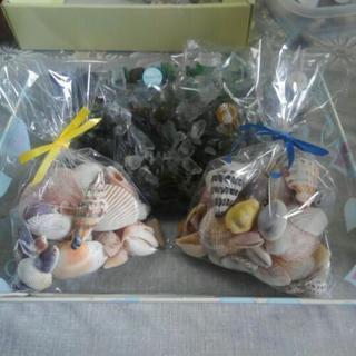 貝殻とワレガラス200円販売