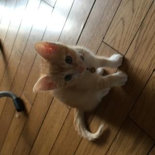 野良猫の仔猫達4匹!可愛いですよ!