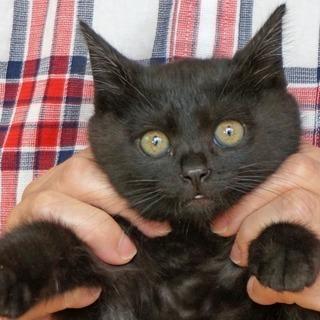 小柄な黒子猫 キウイ。【一時停止】