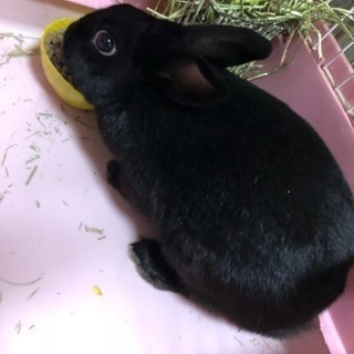 ウサギ 1歳 性別不明