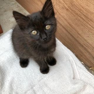 生後2ヶ月の仔猫ちゃん里親募集