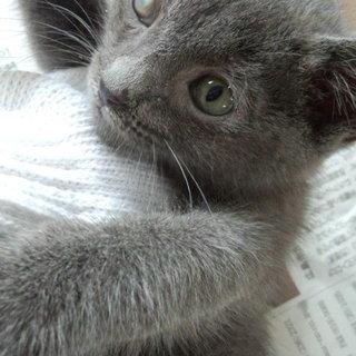 生後約2ヶ月の片目の不自由な子猫の家族になってくださる方を探しております
