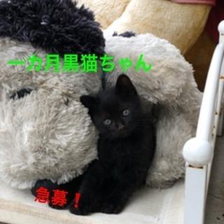 急募!推定生後1ヶ月程黒猫ちゃん里親様★