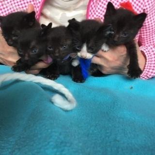 可愛い💕子猫 黒猫5匹