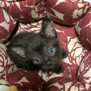 奇跡の天使!黒猫
