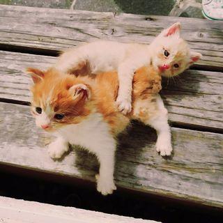元気いっぱいで人懐こい2匹です☆
