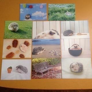 ハリネズミのまるたろうポストカード 11枚セット 【新品】