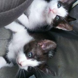 子猫3匹の里親さん募集