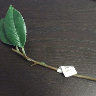 造花椿の葉っぱ