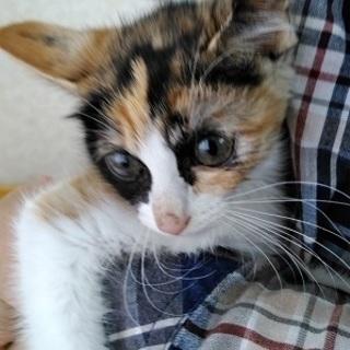とても愛くるしい2ヶ月の赤ちゃん猫!