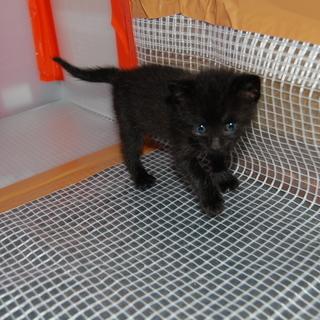 黒猫の やまとくん 宜しくお願いします