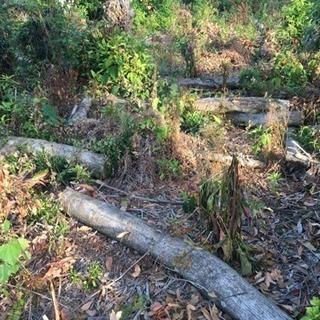 薪ストーブに如何ですか?伐採木差し上げます