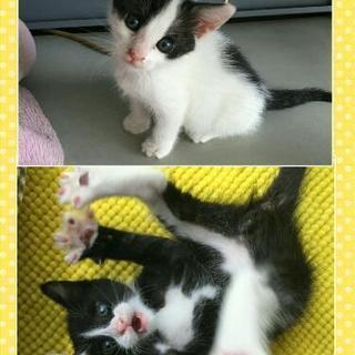 生後約1ヶ月の子猫兄妹