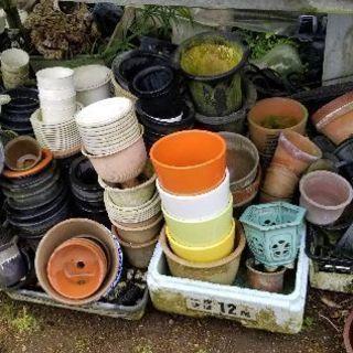 花鉢、ラン鉢 中古から新古